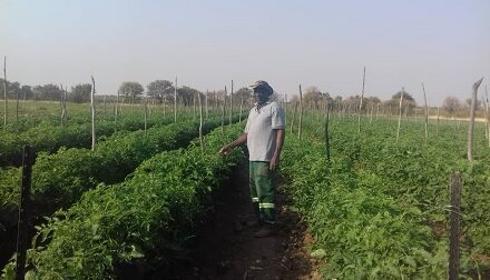 Tales from a street vendor to an award winning farmer