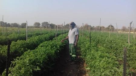 Tales from a street vendor to an award winning farmer