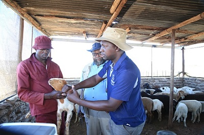 An overview of Namibia's food self-sufficiency